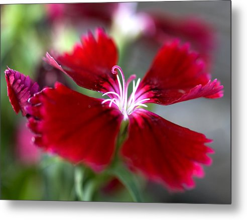 Flower Metal Print featuring the photograph Flower by Jessica Wakefield