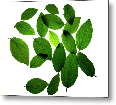 Leaves Metal Print featuring the photograph Leaves on White by Jessica Wakefield