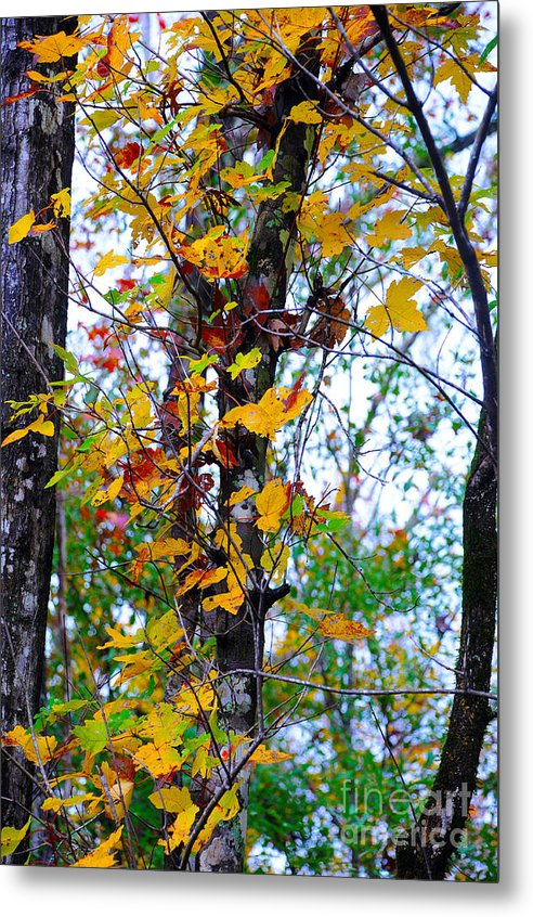 Fall Leaves Metal Print featuring the photograph November Leaves by Leon Hollins III