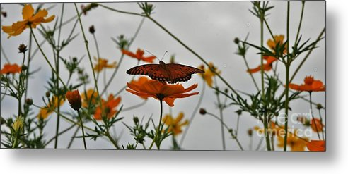 Monarch Butterflies Metal Print featuring the photograph Monarch on the River by Leon Hollins III