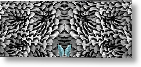 Microscope Metal Print featuring the photograph Blue Butterfly And Antenna by Sheri Neva