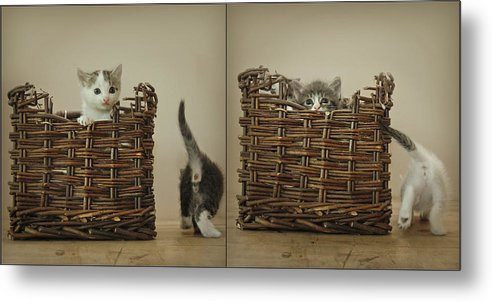Kittens Metal Print featuring the photograph Exchange by Inesa Kayuta