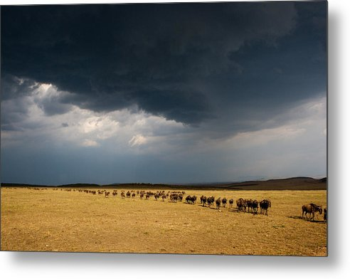 Masai Mara Metal Print featuring the photograph The Great Migration by Paco Feria