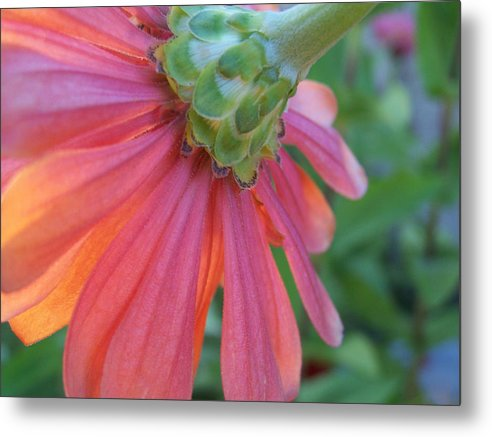Flower Metal Print featuring the photograph Unseen by Sally Engdahl