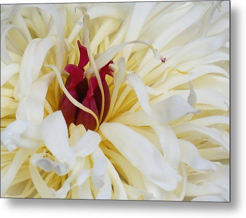 Flower Metal Print featuring the photograph The Heart by Sally Engdahl