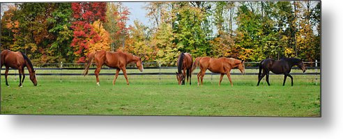 Equine Metal Print featuring the photograph Group Activity by Kristi Swift