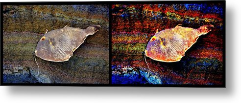 New Life Metal Print featuring the digital art Dead Fish Lives 2a by Doug Hoover