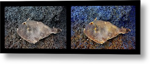 New Life Metal Print featuring the digital art Dead Fish Lives 9a by Doug Hoover