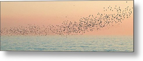 Birds Metal Print featuring the photograph Starlings by Cath Dupuy