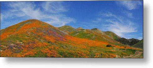 Wildflowers Metal Print featuring the photograph Wildflower Extravaganza by Lynn Bauer