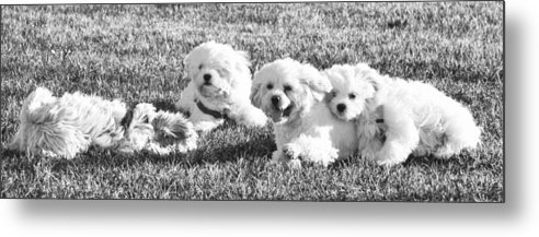 Dog Framed Prints Metal Print featuring the photograph A Day At The Park by Lisa DiFruscio