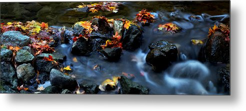 Landscape Metal Print featuring the photograph Maple Leaves-0002 by Sean Shaw