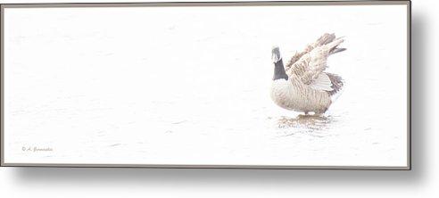 Canada Goose Metal Print featuring the digital art Canada Goose In Salt Marsh, Digital Art by A Gurmankin