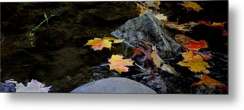 Landscape Metal Print featuring the photograph Maple Leaves-0006 by Sean Shaw