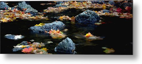 Landscape Metal Print featuring the photograph Maple Leaves-0008 by Sean Shaw