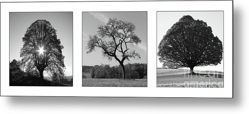 Photograph Metal Print featuring the photograph Trees On Canvas by Bruno Santoro
