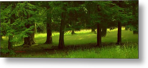 Nature Metal Print featuring the photograph Enchanted Forest by Linda Sannuti