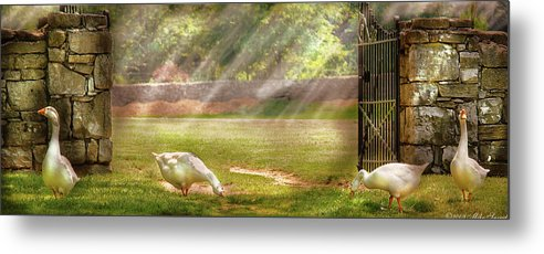 Savad Metal Print featuring the photograph Farm - Geese - Birds Of A Feather - Panorama by Mike Savad