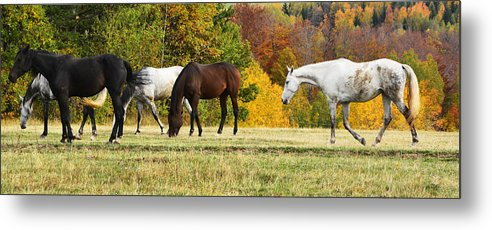 Autumn Metal Print featuring the photograph Horses In Autumn by Predrag Lukic