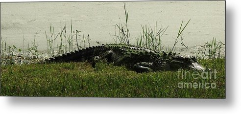 Gator Metal Print featuring the photograph Gator by Judy Waller