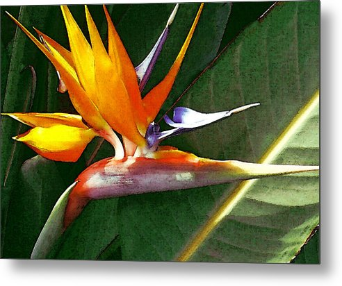 Bird Of Paradise Metal Print featuring the photograph Crane Flower by James Temple