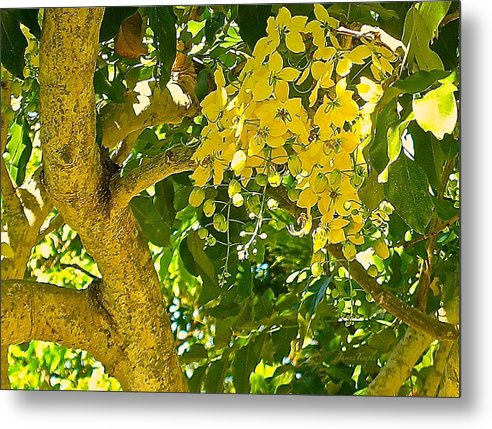 Golden Shower Tree Metal Print featuring the photograph Under The Shower Tree by James Temple