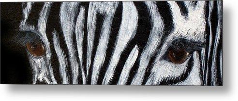 Zebra Eyes Metal Print featuring the painting Whos Watching Who  Zebra by Darlene Green