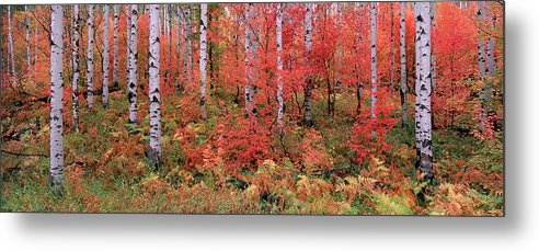 Panoramic Metal Print featuring the photograph The Wasatch Mountain Forest Of Maple by Mint Images - David Schultz