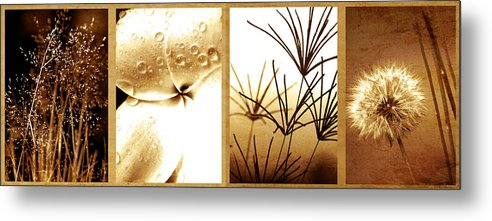 Floral Metal Print featuring the photograph Nature's Window by Holly Kempe