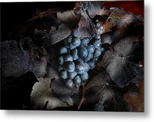 Metal Print featuring the photograph grape vine I by Jon Daly