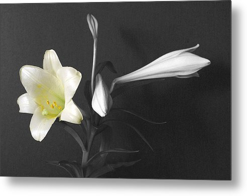 Lilies Metal Print featuring the photograph Lilies In Black And White by Michael Vinyard