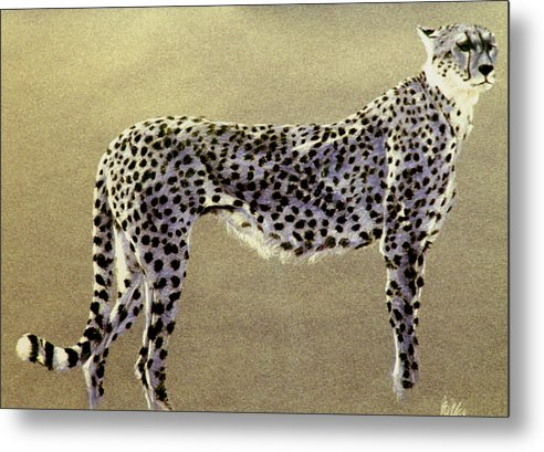 Wildlife Metal Print featuring the drawing Cheetah by Paul Miller