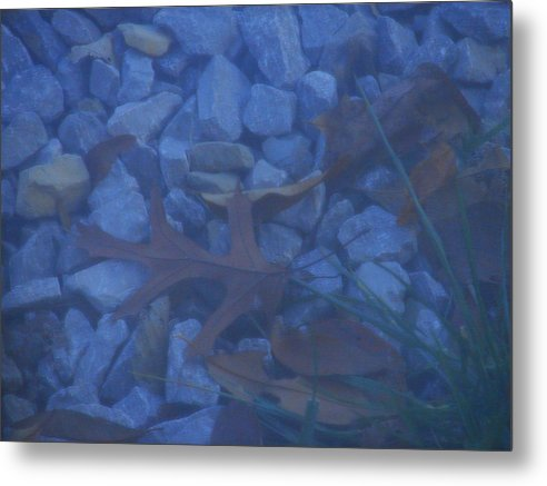 Metal Print featuring the photograph Blue Leaf by Luciana Seymour