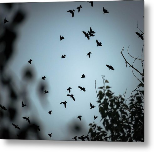 Bird Metal Print featuring the photograph Dark Knights by James Craddock