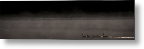 Duck Metal Print featuring the photograph Breaking The Surface by Aaron Bedell