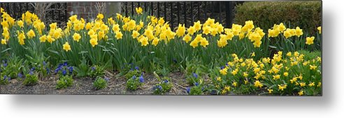 Flowers Metal Print featuring the photograph Flowers 37 by Joyce StJames