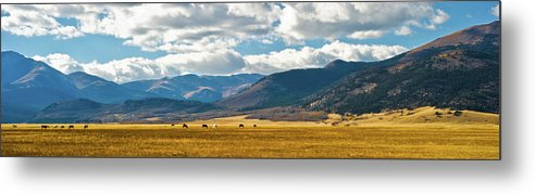 Panorama Metal Print featuring the photograph Golden Field by Charles Harbin