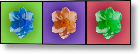 Daffodils Metal Print featuring the photograph Daffodils by Heather Provan