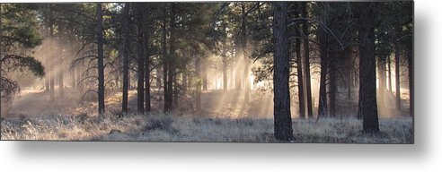 Coconino Forest Dawn Evergreen Forest Dawn Morning Light Forest Light Forest Sunbeams Rays Of Sunlight Forest Lightscape Natural Lightscapes Sunshine Natural Landscapes Rare Nature Pixels.com Nature Conservancy Tree Light Arizona Landscapes Ponderosa Forest High Desert Forest High Desert Woodland Flagstaff Arizona Metal Print featuring the photograph Coconino Dawn by Joshua Bales