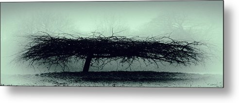 Britain  Metal Print featuring the photograph Middlethorpe Tree In Fog Gray And Green Panorama by Tony Grider