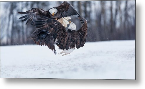 Focus of an eagle by Murray Rudd