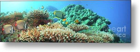 Underwater Panorama Metal Print By Mothaibaphoto Prints