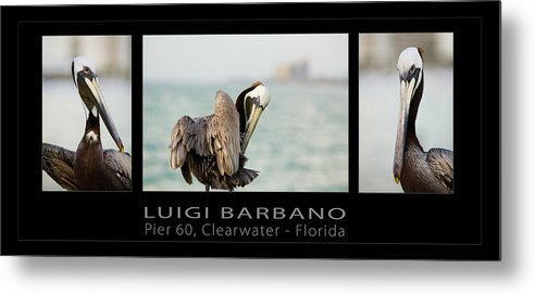 Pelican Metal Print featuring the photograph Pier 60 Number 1 by Luigi Barbano BARBANO LLC
