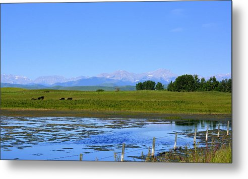 Pond Metal Print featuring the photograph Pond Pasture And Rocky Mountains by Ed Mosier