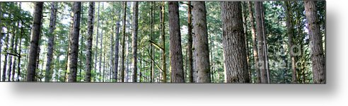 Trees Metal Print featuring the photograph Trees by Connor Hauenstein