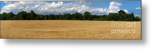 Wheat Metal Print featuring the photograph Kansas Wheat Field 5a by Gary Gingrich Galleries