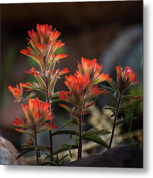 Indian Paintbrush Along Sycamore Canyon by Mikes Nature