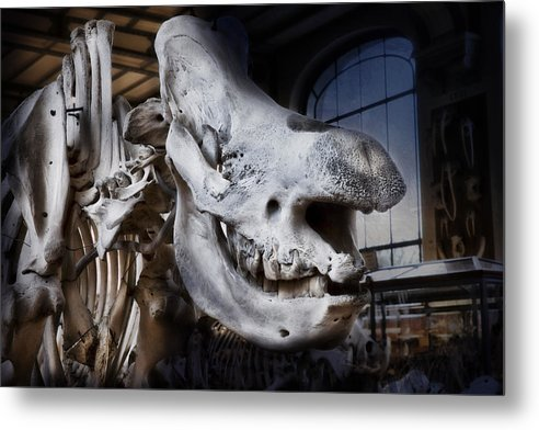 Evie Metal Print featuring the photograph Paris Gallery Of Paleontology 3 by Evie Carrier