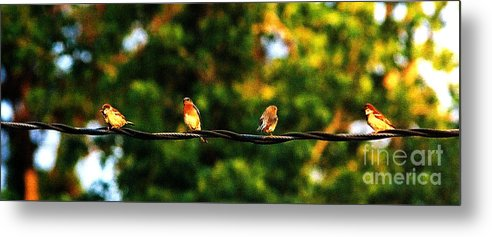 Color Photography Metal Print featuring the photograph 4 Birds by Leon Hollins III