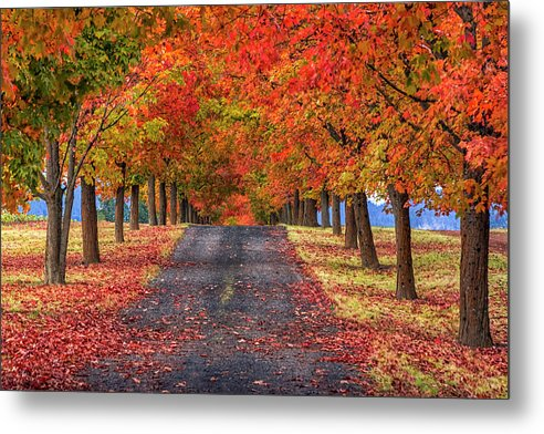 Greenbluff Autumn by Mark Kiver